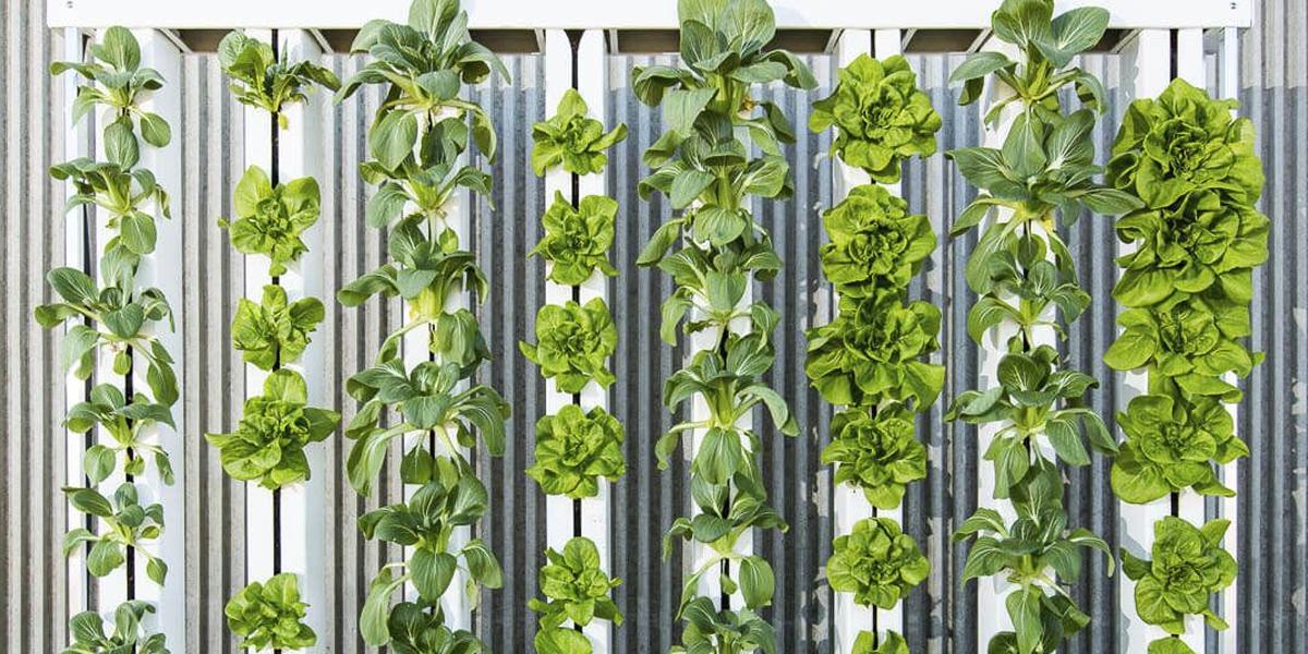 Best Interior Gardening Ideas | Indoor Garden